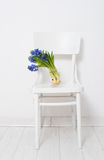 Blue hyacinth in a vase Stock Photography