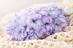 Blue hyacinth on a vintage fabric Royalty Free Stock Photography