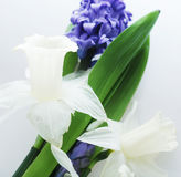 Blue hyacinth and white narcissus Stock Photos