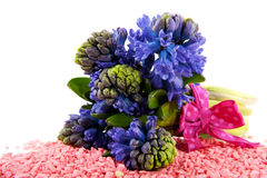 Blue Hyacinths Royalty Free Stock Image