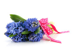 Blue hyacinths Stock Photography