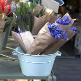 Blue hyacinths. And red tulips royalty free stock image