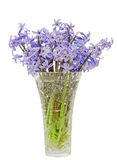 Blue Hyacinthus orientalis flowers (common hyacinth, garden hyacinth or Dutch hyacinth) in a transparent vase, close up Royalty Free Stock Images