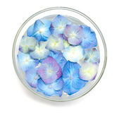 Blue hydrangea flowers in a glass bowl fulled with water Stock Photography