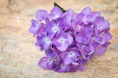 Blue hydrangea flowers Royalty Free Stock Image