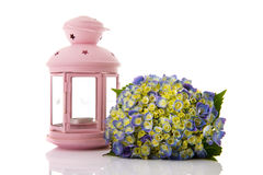 Blue Hydrangea and pink lantern Stock Image