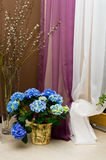 Blue hydrangea and pussy willows  Royalty Free Stock Image