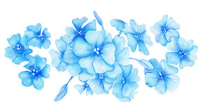 Blue Hydrangea Watercolor Illustration Royalty Free Stock Image
