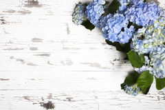 Blue Hydrangeas Old White Boards. Blue and blue and yellow hydrangeas on worn painted white boards Stock Image
