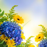 Blue hydrangeas and yellow asters Royalty Free Stock Photography
