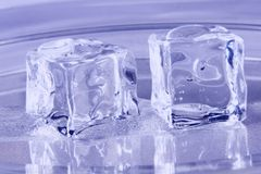 Blue Ice Cubes. Melting on a tray Royalty Free Stock Image