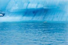 Blue ice at Icelake Jokulsarlon Iceland. Glacier close up royalty free stock photography