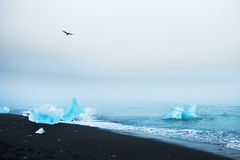 Blue icebergs on the beach. Iceland Royalty Free Stock Photography