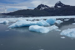 Blue icebergs from a calving glacier Stock Images