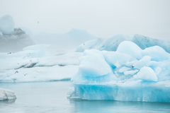 Blue icebergs Stock Images