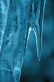 Blue icicle. In winter season Stock Photography