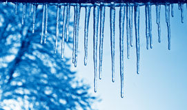 Blue icicles Royalty Free Stock Image