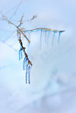 Blue icicles in tree Stock Photo