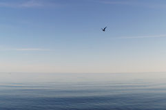 Blue Immensity Royalty Free Stock Photo