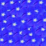 Blue impatiens flower,  on white background Stock Photos