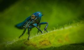 Blue Insect in Close-up Photography Royalty Free Stock Images