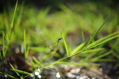 Blue Insect on Green Plant on Tilt Shift Lens Photography Stock Photography