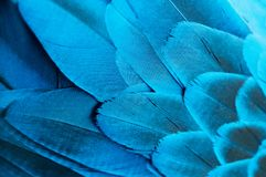 Blue iridescent feathers stock image
