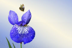 Blue iris and butterfly. On background sky stock photo
