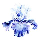 Blue iris botanical flower. Watercolor background illustration set. Watercolour drawing fashion aquarelle isolated. Blue iris. Floral botanical flower. Wild stock photos