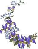 Blue Iris Flower Curl Stock Image