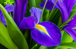 Blue iris flower over green grass at the summer garden Royalty Free Stock Photography