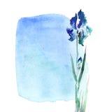 Blue iris flower on sky background. Stock Image