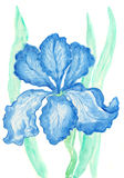 Blue iris, watercolours painting Stock Images