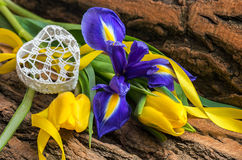 Blue iris and yellow tulip flower with decorative heart. On wooden background.Soft focus, deliberate slight blurring Stock Photos