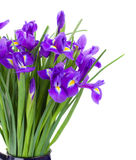 Blue irise flowers bouquet stock image