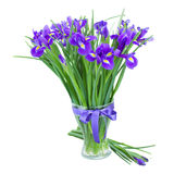 Blue irise flowers in glass vase royalty free stock images