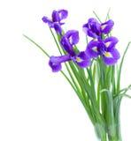 Blue irise flowers posy. Blue  irises flower posy  isolated on white background Stock Photos