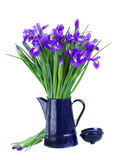 Blue irise flowers in pot royalty free stock photo