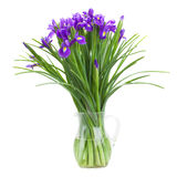 Blue irise flowers in vase Stock Photography