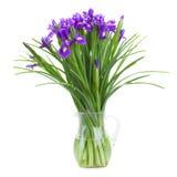 Blue irise flowers in vase stock photography