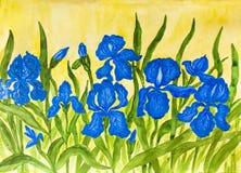 Blue irises Stock Photography