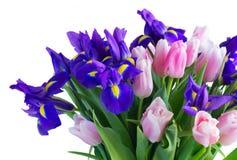 Blue irises and pik tulips royalty free stock photo