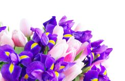 Blue irises and pik tulips royalty free stock photos
