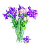 Blue irises and pik tulips stock image