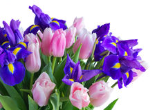 Blue irises and pik tulips Royalty Free Stock Image