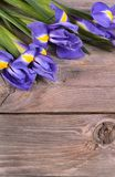 Blue irises on wooden boards Royalty Free Stock Photo