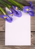 Blue irises on wooden boards Royalty Free Stock Images