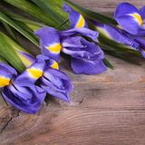 Blue irises on wooden boards Royalty Free Stock Photos