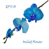 Blue isolated orchid flower Royalty Free Stock Images