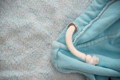 Blue jacket Stock Photo